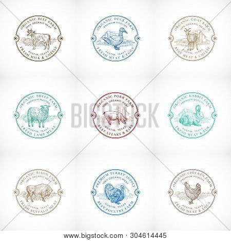 Organic Cattle And Poultry Farm Framed Retro Badges Or Logo Templates Set. Hand Drawn Domestic Anima
