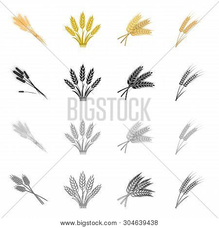 Isolated Object Of Wheat And Stalk Logo. Collection Of Wheat And Grain Vector Icon For Stock.