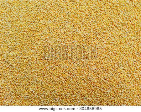 Polished Millet Texture  Background. Cereal Millet Plant Grown In Warm Countries On Poor Soils. Dry