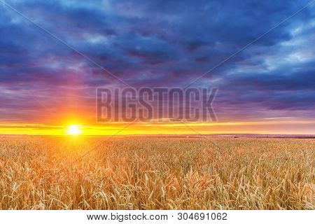 Dramatic sunset above the wheat field in european countryside