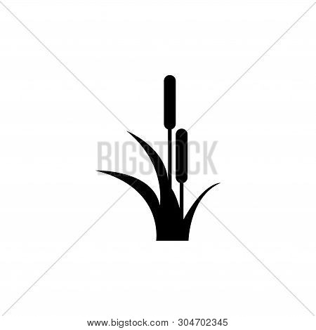 Reed, Cattail, Cane. Flat Vector Icon Illustration. Simple Black Symbol On White Background. Reed, C