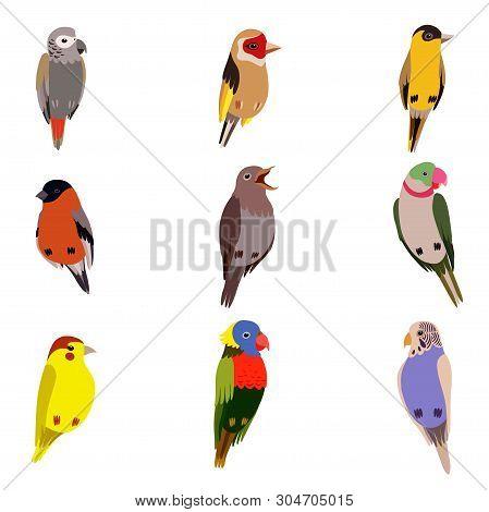 Little Birds Set, Amadin, Bullfinch, Canary, Parrot, Nightingale, Goldfinch, Budgerigar, Cute Home P