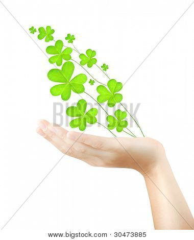 Female hand holds fresh clover plant, green spring leaves, shamrock branch isolated over white background, St. Patrick's day, holiday lucky symbol
