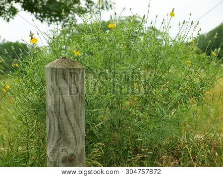 Wildflowers Behind Wood Grained Boundary Marker Stand Out In Details.