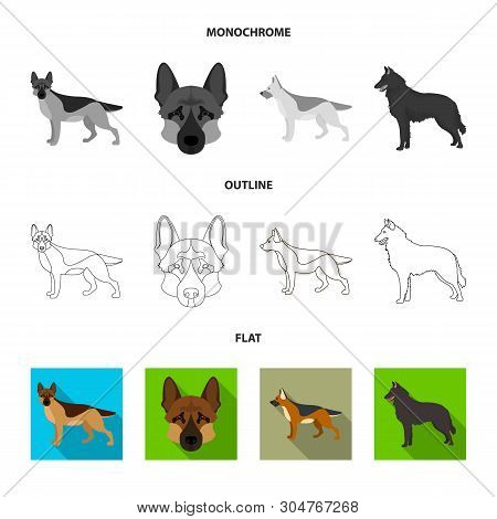 Isolated Object Of Sheepdog And Sheltie Icon. Collection Of Sheepdog And Shepherd Vector Icon For St
