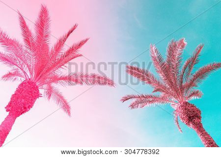 Two Tall Palm Trees On Toned Gradient Pink Blue Sky With Light Fluffy Clouds. Creative Trendy Summer