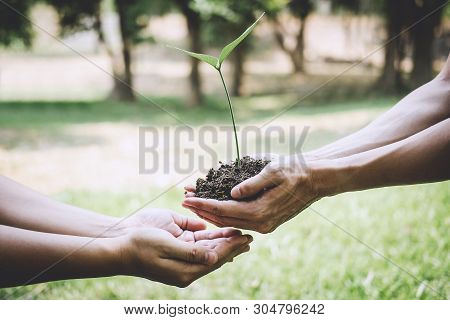 World Environment Day Reforesting, Hands Of Young Man Helping Were Planting The Seedlings And Tree G
