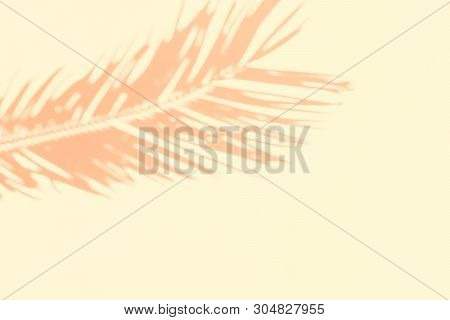 Shadow Silhouette Of Beautiful Feathery Palm Leaf In Sunlight On Soft Pastel Peachy Off-white Color
