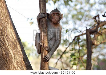 Monkey on tree, jungle