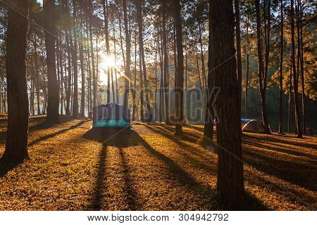 Adventures Camping Tourism And Tent Under The View Pine Forest Landscape Near Water Outdoor In Morni