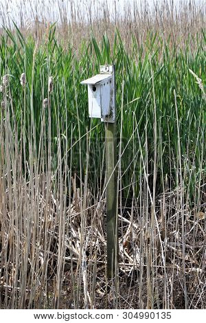 Painted White Wooden Birdhouse Located In The Tall Grasses