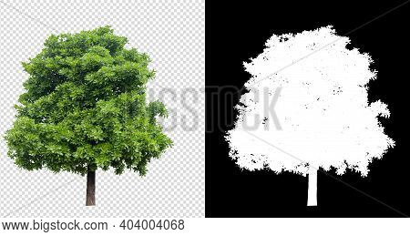 Tree On Transparent Background Image With Clipping Path And Alpha Channel
