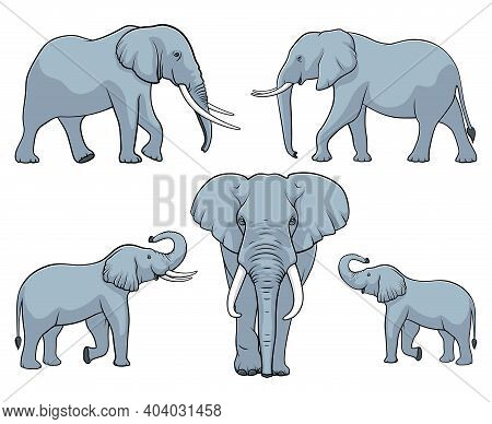 Elephant Family. Set Of Elephants. Vector Illustration On White Background