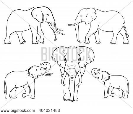 Elephant Family. Set Of Elephants. Linear Vector. Vector Illustration On White Background
