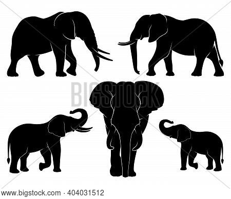Elephant Family. Set Of Silhouettes Of Elephants. Vector Illustration On White Background