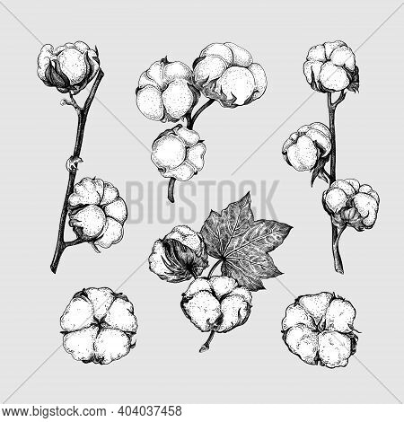 Set Of Different Branches And Cotton Flowers Isolated On A Grey Background. Black And White Sketch.