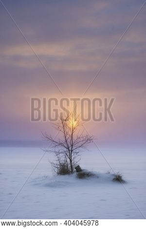Lonely Tree On The Background Of A Colorful Sunset With The Sun In Winter On A Frozen Lake In The Ha