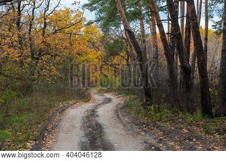 Autumn landscape with pathway in forest