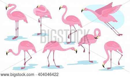 Pink Flamingo Bird In Different Poses Flat Set For Web Design. Cartoon Flamingo Standing, Flying And