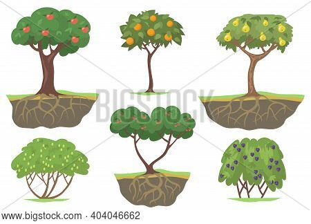 Green Fruit Trees And Berry Bushes Flat Set For Web Design. Cartoon Ripe Apples, Oranges, Peaches An