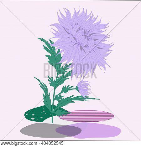 Flower Arrangement, Chrysanthemum - Vector. Interior. Floristics. Spring Still Life