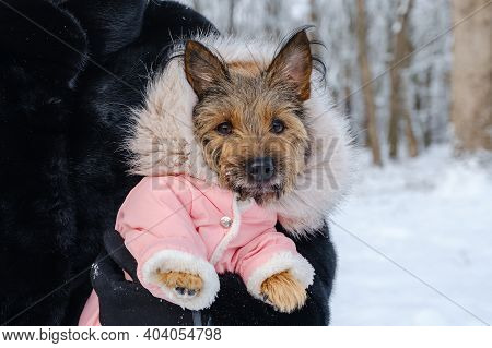 Unrecognized Woman Holds Her Dressed Dog In Her Arms In Winter Outdoors On Walk. Pet Care Concept.