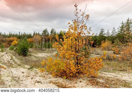 small oak tree on meadow in autumn forest