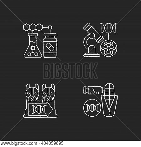 Genetic Modification Chalk White Icons Set On Black Background. Dna Microarray. Animal Cloning. Gene