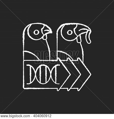 Evolutionary Genetics Chalk White Icon On Black Background. Animal Cloning. Zoology Research. Dna Ex