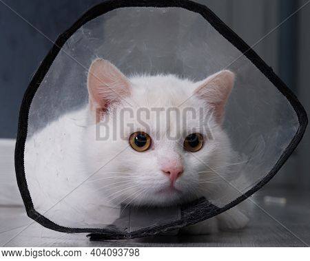 The Head Of A White Cat Wearing A Transparent Plastic Elizabethan Collar Close-up. The Collar Protec
