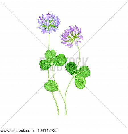 Clover Flower Head On Vector Photo Free Trial Bigstock