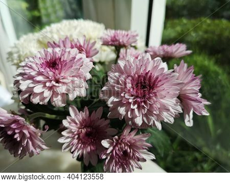 Gerbera Flower Beautiful Bouquet In Water Glass Colorful Beautiful, Violet Color, Barberton Daisy