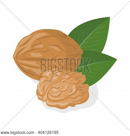 Walnut Kernel In Shell On A White Background. Organic Healthy Nut. Vector Illustration. Can Also Be