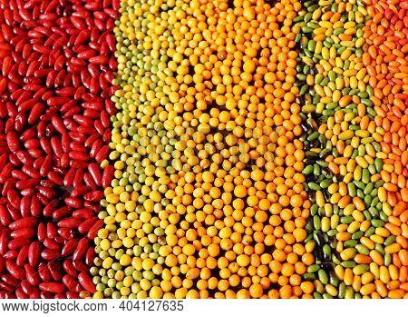 Fruit Aji Charapita Wild Peruvian Chili Pepper.is Very Important In Peruvian Amazonian Cuisine The H