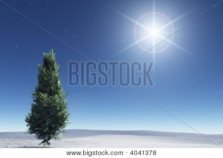 Starry Night And Fir Tree