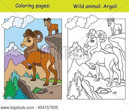 Vector Coloring Page With Cute Argali In Mountain Area. Cartoon Isolated Colorful Illustration. Colo
