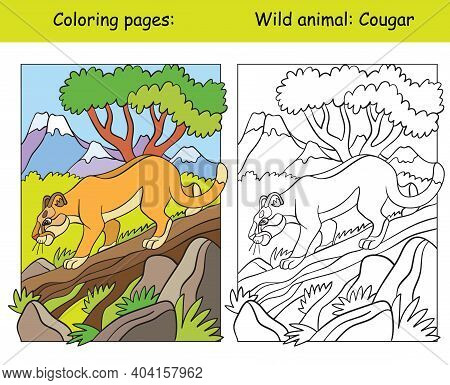 Vector Coloring Page With Walking Cougar In Mountain Area. Cartoon Isolated Colorful Illustration. C