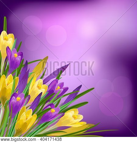Vector Color Illustration With Crocuses.multicolored Crocuses On A Colored Background In A Vector Il