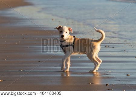 Young Happy Female Puppy Standing In The Sand On The Beach In Cadiz