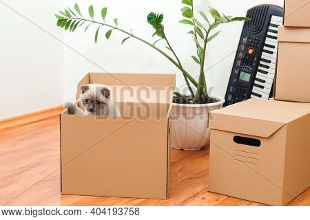 Cat In A Box In New House. Packed Household Stuff For Moving Into New House. Animals, Relocation And