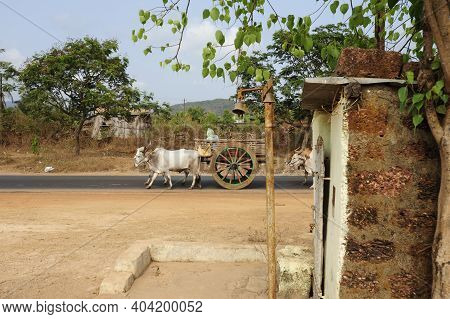 Cow As A Sacred Animal In India