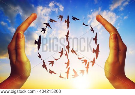Hands and birds flying in peace symbol formation at sunset sky.