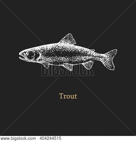 Trout Illustration. Fish Graphic Sketch In Vector.
