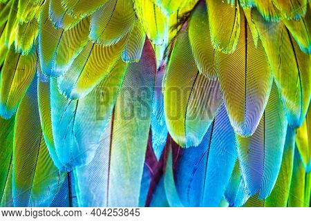 Macaw Wings. Thé Stunning Beauty Of Nature.vivid, Intensive Blue And Yellow Colored Feather Structur