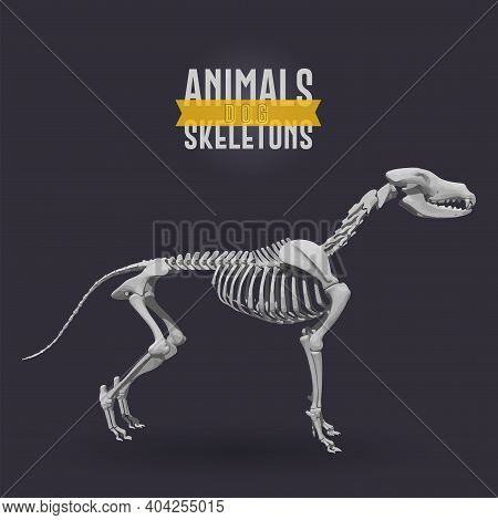 Dog Animals Skeletons In Dark Background - Vector