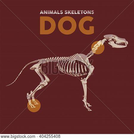 Dog Animals Skeletons In Red Background - Vector