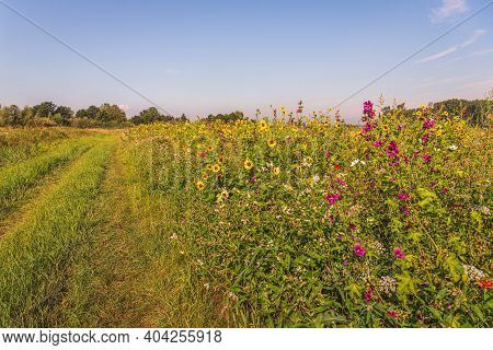 Grassy Path With Tire Tracks Along A Dutch  Field And A Field Edge With A Variety Of Flowering Plant