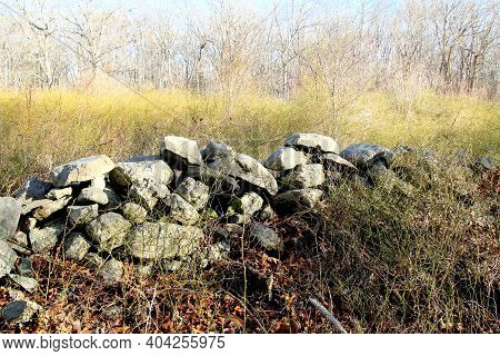 Centuries Old Stonewall Overgrown With Heavy Concentration Of Thorny Briars On A Sunny Winter Day.