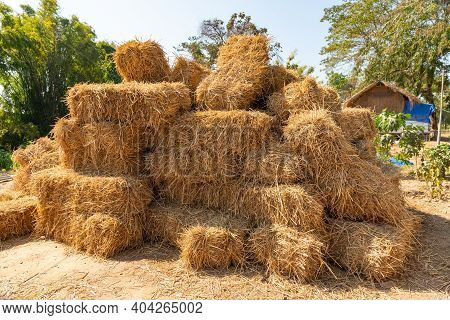 Reeds Texture. Straw Surface. Thatch Pack Canvas. Straw Pack Texture. Stack Of Straw Texture Image.