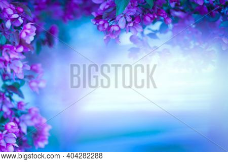 Blurred Floral Background. Spear Space For Your Text, Design. Beautiful Flowering Branches With Pink